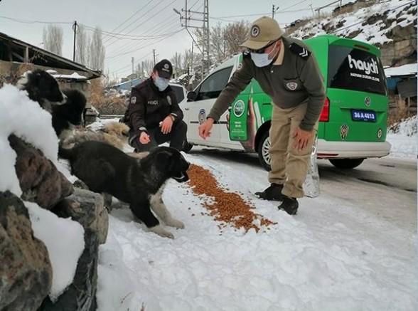 Hayvanları Koruma Polisi, sokak hayvanlarını besledi