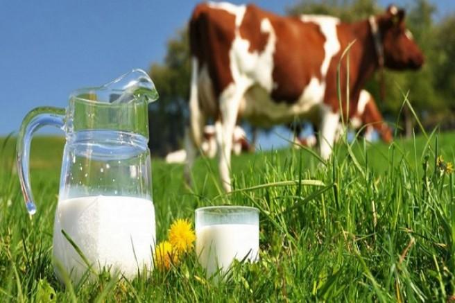 Haziran ayında 835 bin 172 ton inek sütü toplandı
