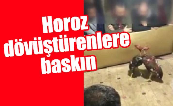 Horoz dövüştürenler yakalandı