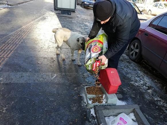 Kars Belediyesi sokak hayvanlarına mama dağıttı