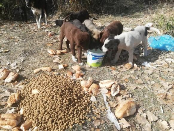 Kars Belediyesinden sokak hayvanlarına mama desteği
