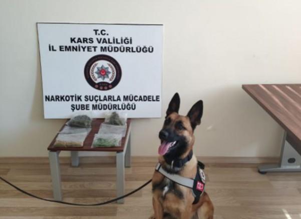 Kars Emniyetinin narkotik dedektör köpeği Odin'in ilk icraatı