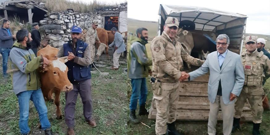 Kars'ta çalınan hayvanları Jandarma Ardahan'da buldu